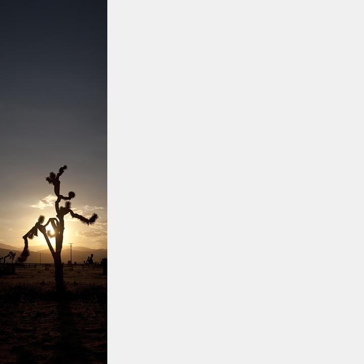 Monkey Tree (V-45)