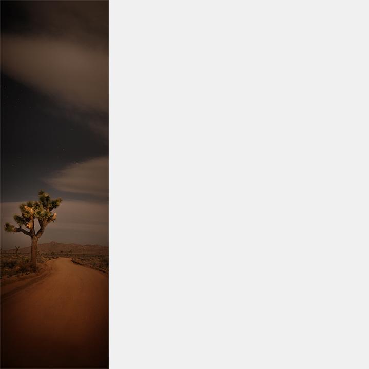 Joshua Tree (2) (V-46)
