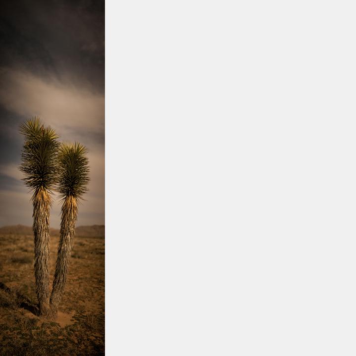Joshua Tree (1) (V-47)